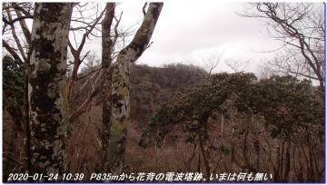 200124_momoitoge_tengusugi_012