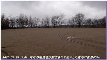 200124_momoitoge_tengusugi_016