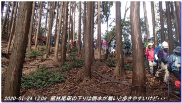 200124_momoitoge_tengusugi_040